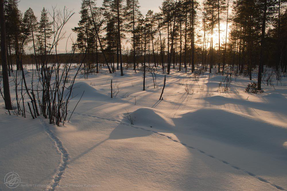 Séjour à Nellim (Finlande) février-mars 2011