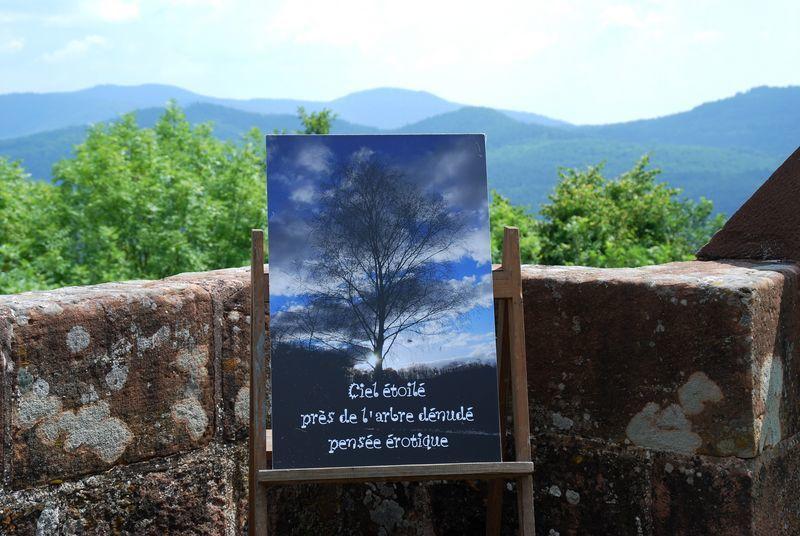 Album - Vosges-du-Nord