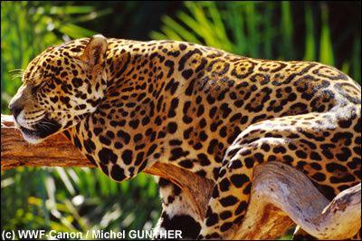les plus belles images sur les animaux et la nature