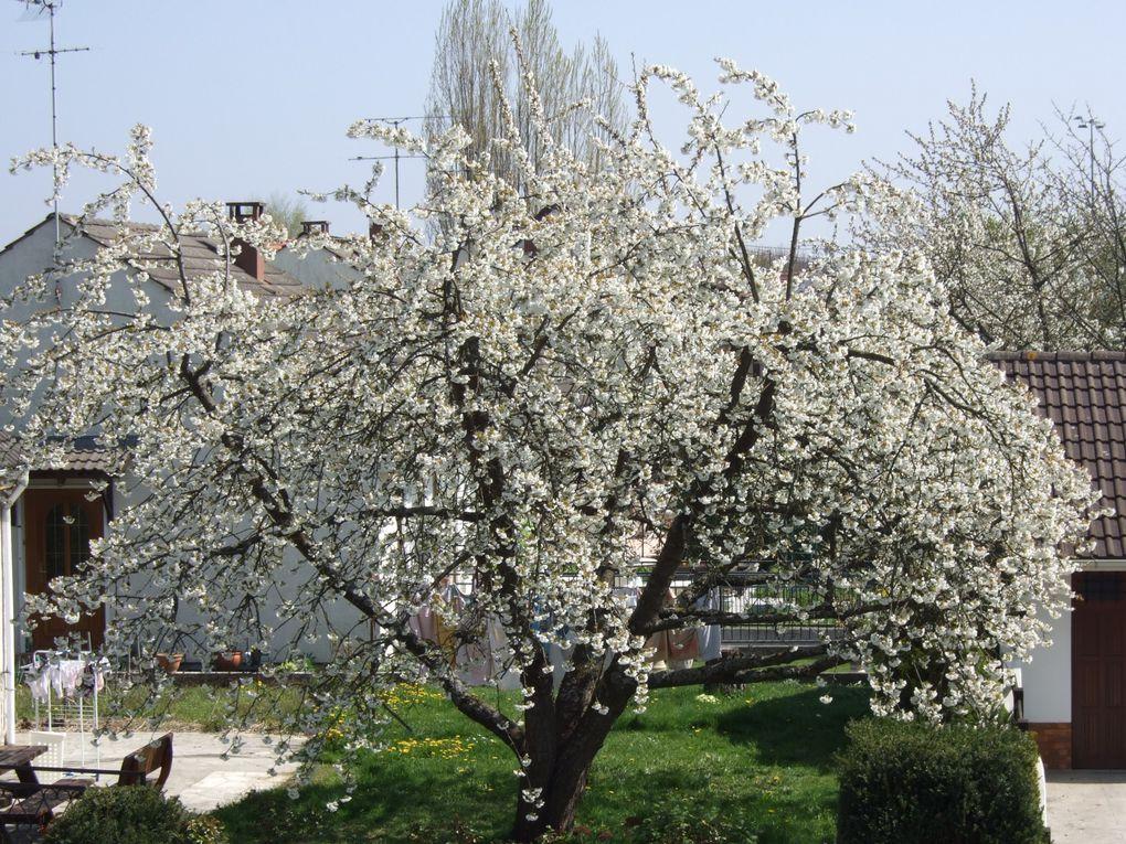 Album - fleurs-et-jardin