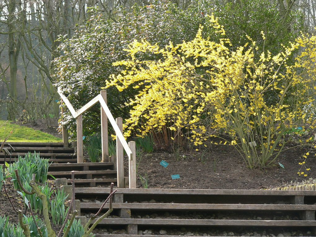 Premier jour d'ouverture des jardins de Valloires 2011....fin de l'hiver...
