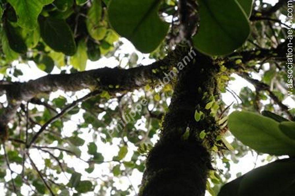 Album - Orchidées sauvages