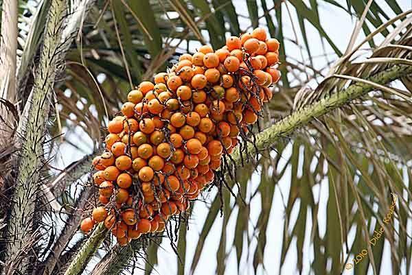 Fruits et légumes en Guyane