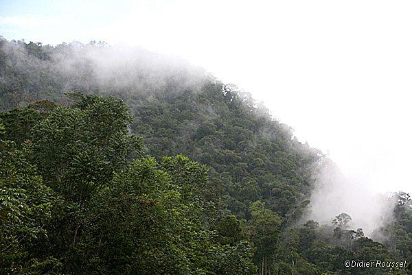 Album - Vegetation-et-paysage