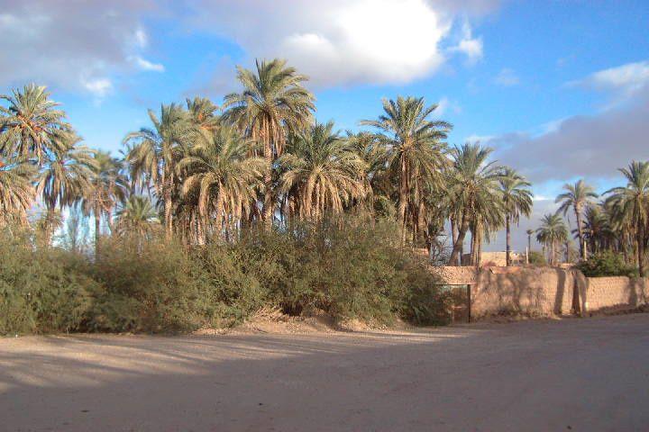 Album - Laghouat photographié par le regretté Makhlouf Mamir