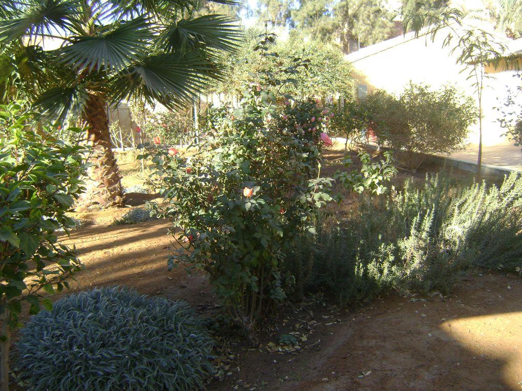 Album - Jardins de Hassi Messaoud janvier 2010