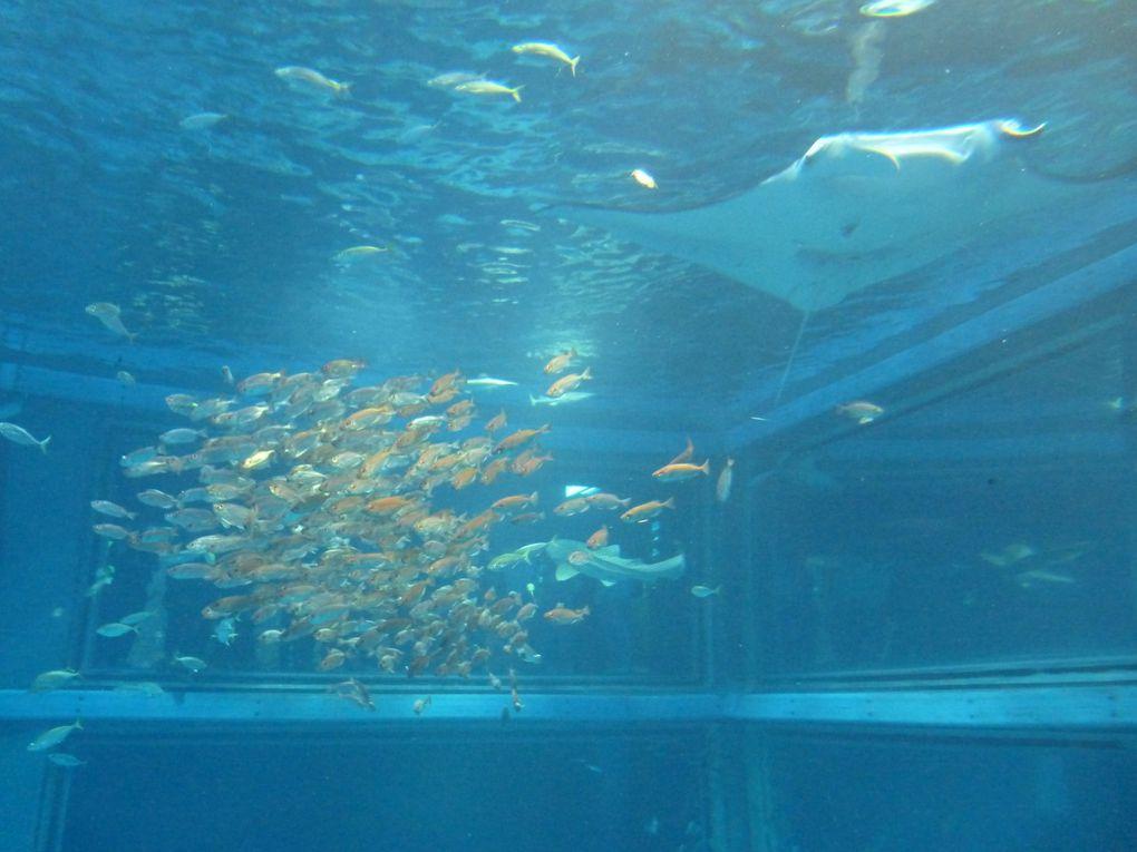 Album - l'aquarium d'osaka