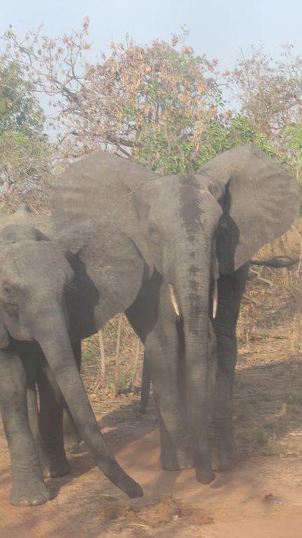 BURKINA-FASO ... Le Raid de la Savane