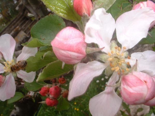 les plus belles fleurs sont encore plus belles de près, regardez bien les détails, vous serez étonnés.