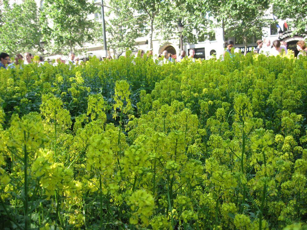 Les Champs Elysées étaient tout verts les 23 et 24 mai 2010