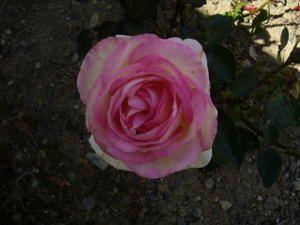Mes fleurs et la nature