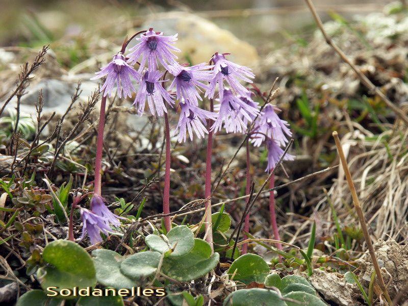 Les fleurs de nos randos, celles que l'on arrive à identifier...