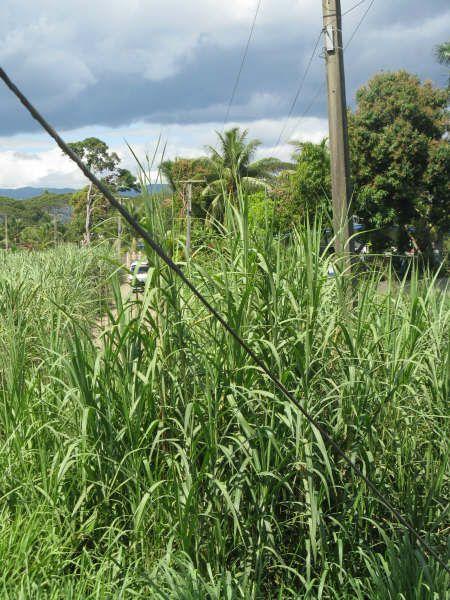 Ma semaine sur l'île FIJI