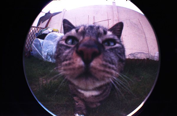 Album - FISHEYE