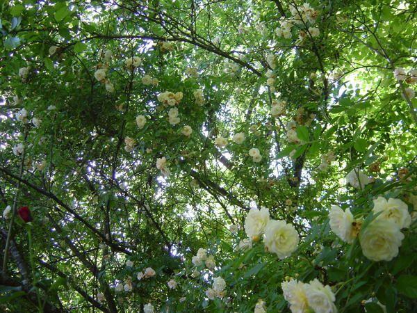 jardin de Clarisselles