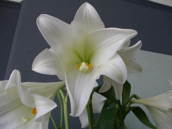 Album - mes-photos--fleurs