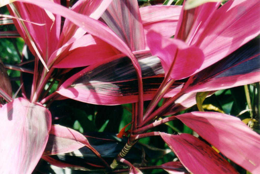 Album - series-flores