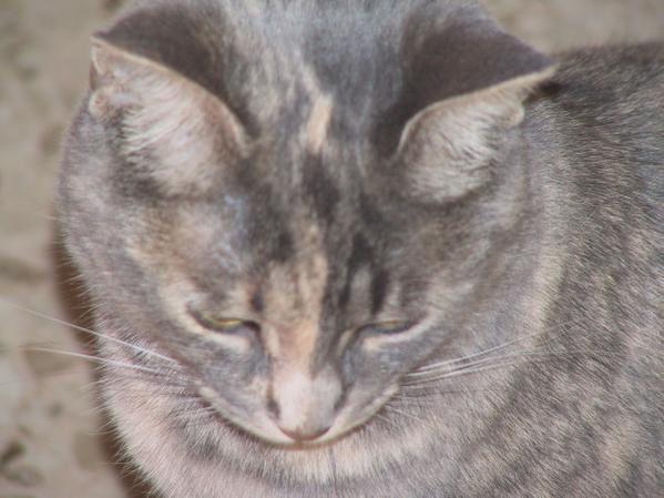 Ma belle grise adoptée à la SPA née le 04 juillet 2007.