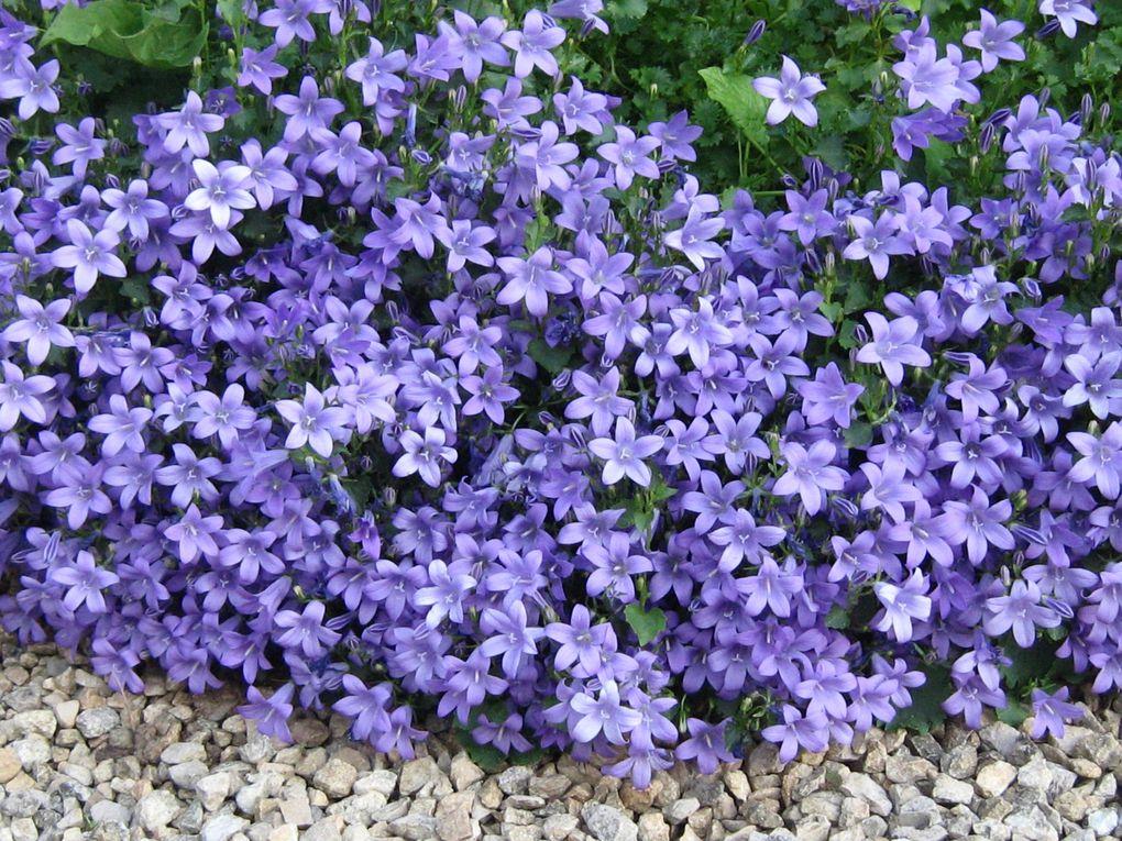 Diverses fleurs printanières dans le jardin du DAVIA.