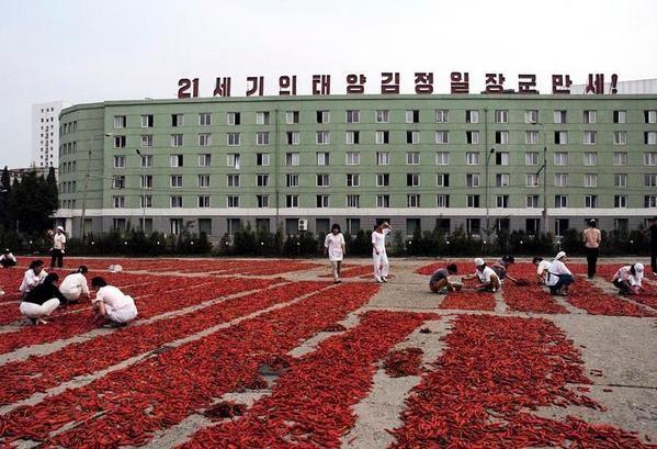 Alain Noguès, photojournaliste (www.alain-nogues.com), participait au voyage en Corée organisé en août 2006 par l'AAFC.