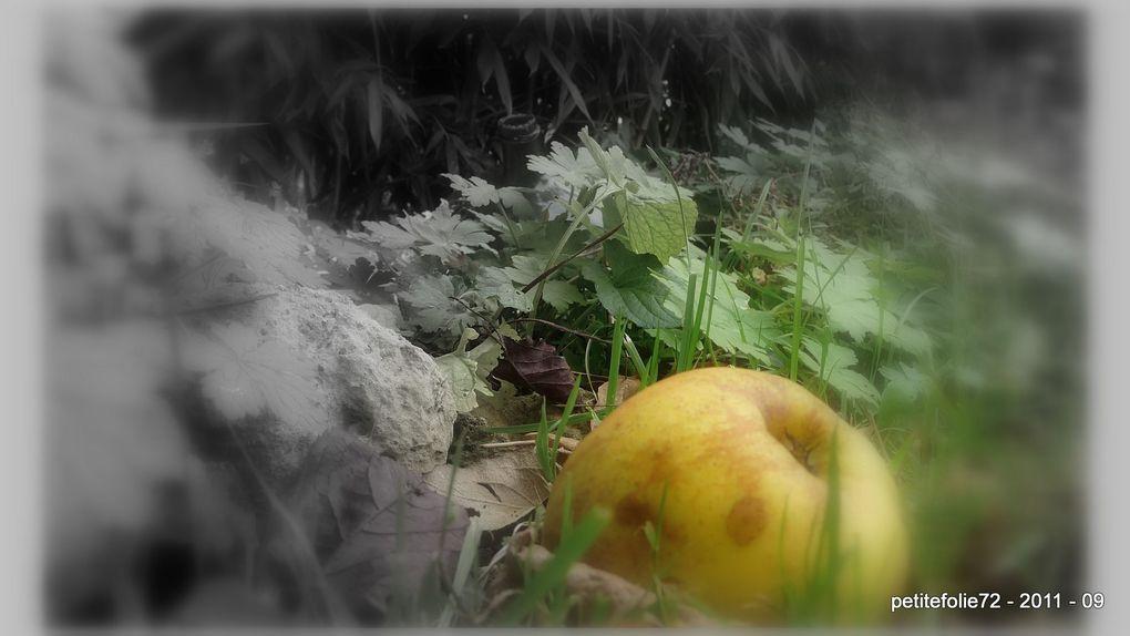 Album - automne
