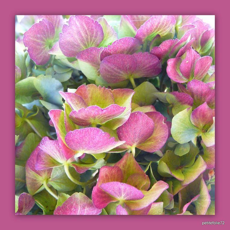 Album - bouquets