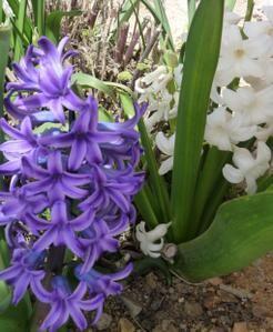 Album - fleurs-et-bouquets
