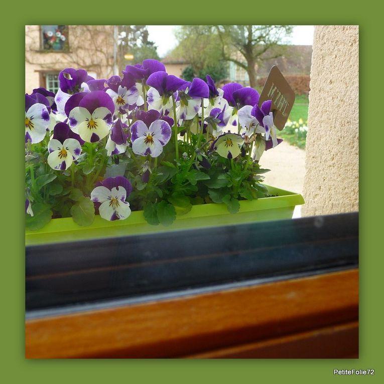 Album - printemps