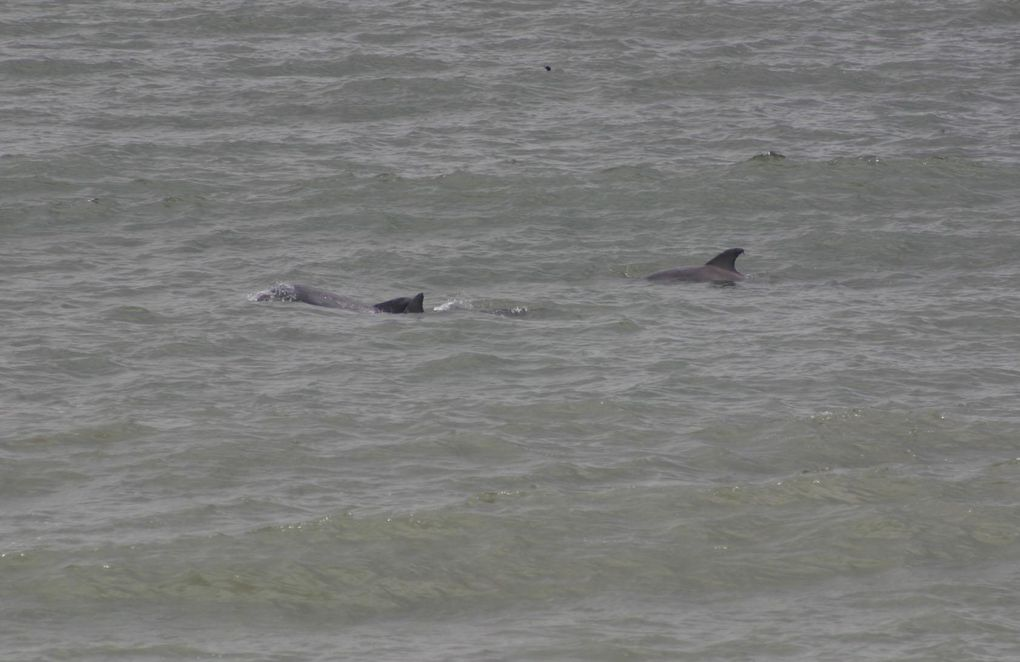 Album - Dauphins-Rencontre à Virginia-Beach