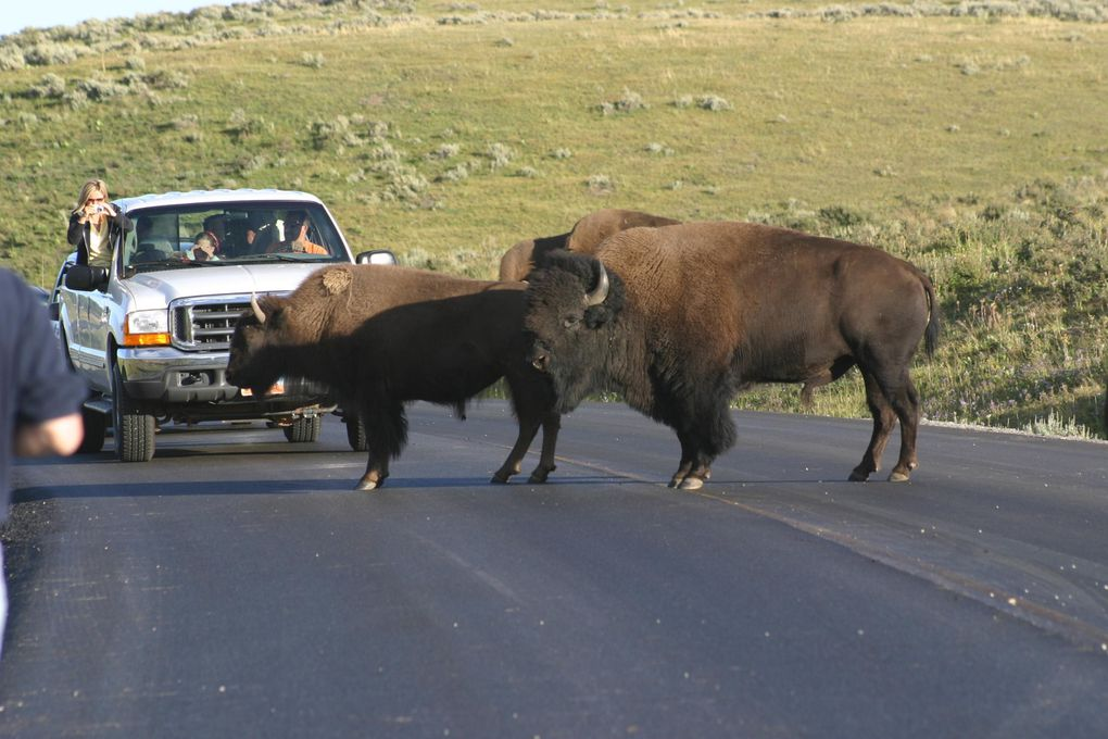 Album - Yellowstone NP, 2004