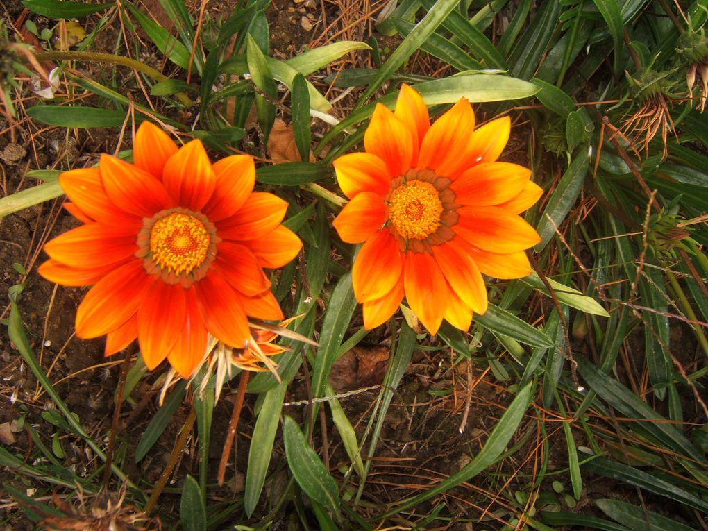 Album - Fleurs d' été