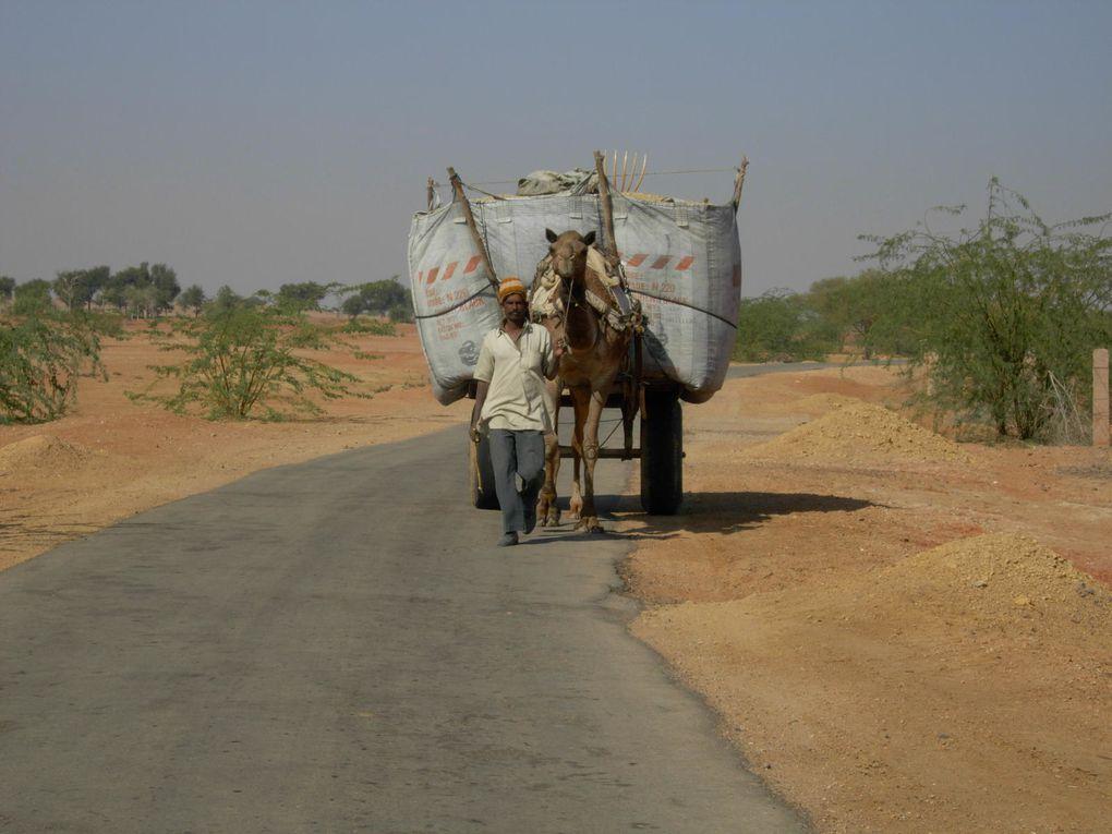 Tessa nous raconte son periple a Barsingha (Rajasthan - Inde)