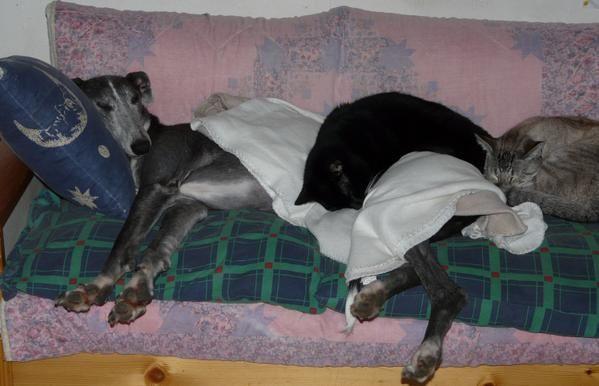 Sauvée par l'association Recal, grace à Pamela, en Avril 2008, Bella est arrivée en juin chez nous. Voici son histoire en photos.