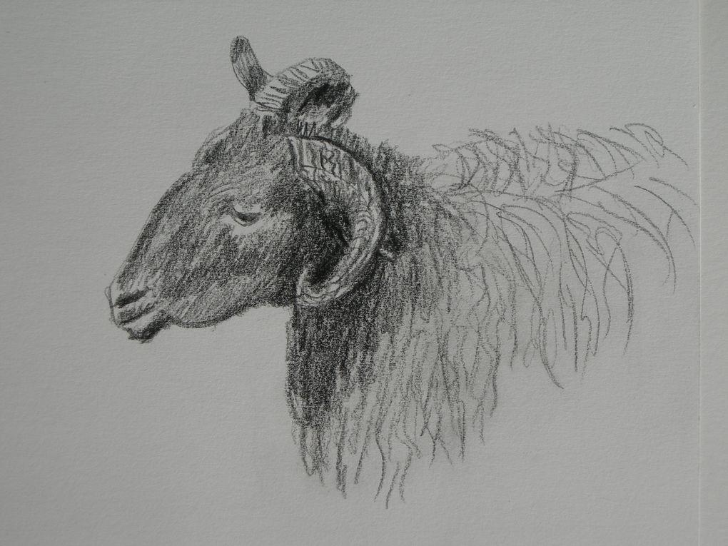Album - animaux