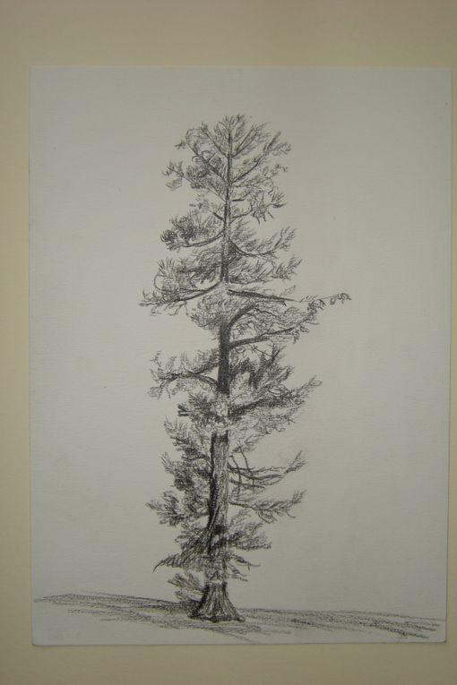 Dessins faits à Talence par M.Wiedemann, au crayon néro sur papier à calligraphie