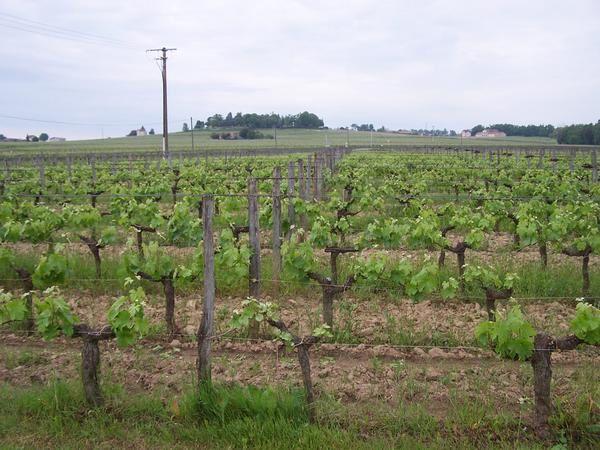 Album - la viticulture bio