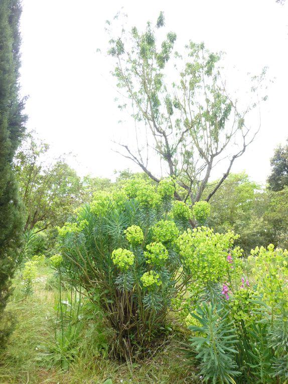 Album - 22052013 Sortie Parc du Grand Blottereau