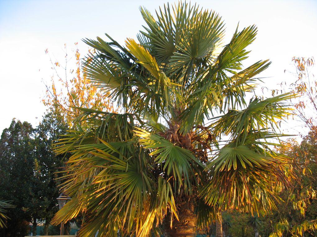 L'environnement du Petit-Paris est composé de nombreuses plantes exotiques et jardins à la française...