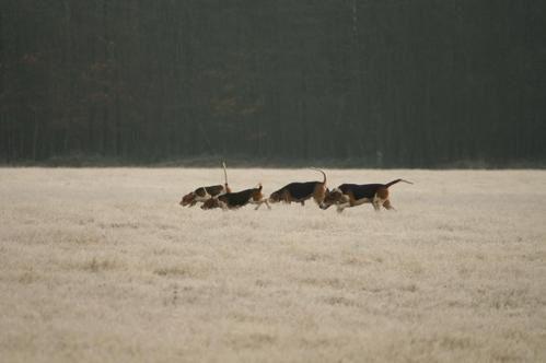 photos chasse, animaux et autres