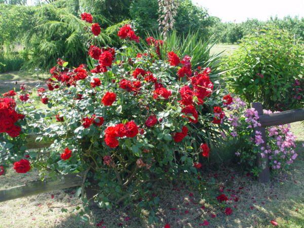 fleurs de provenance diverses