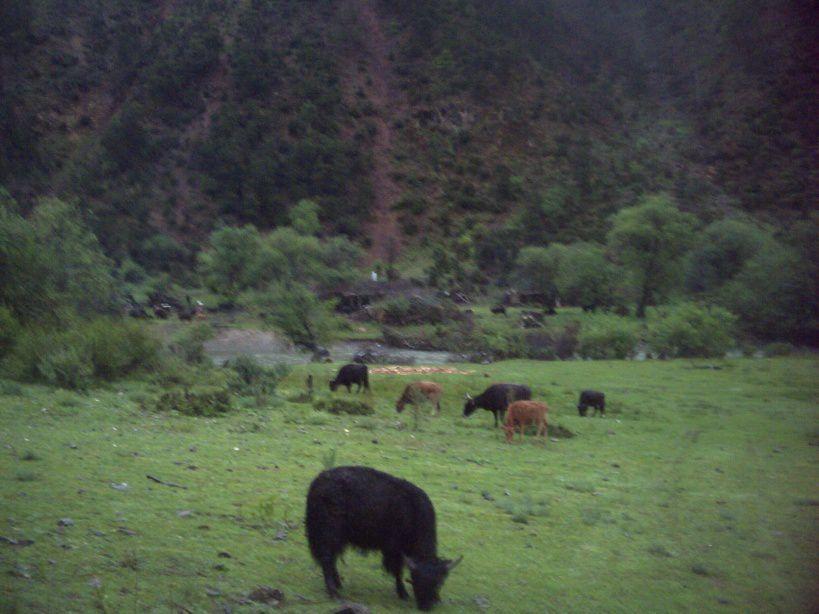 Etre nomade dans le conté de Xiangcheng