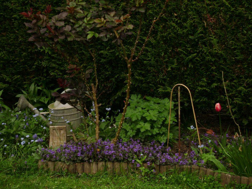 Album - fleurs-du-jardin 2009
