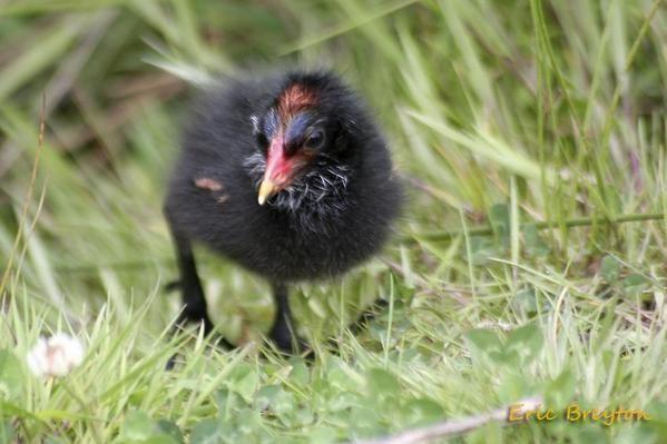 photos d'animaux libres ou captifs prise dans l'enceinte d'un parc animalier ou ornithologique.