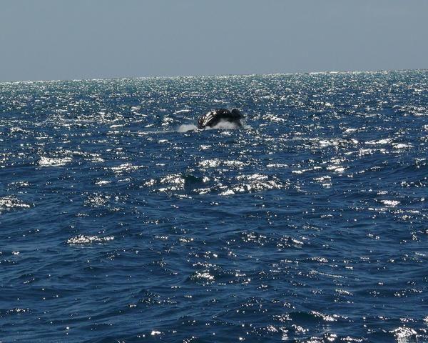 Album - Baleines