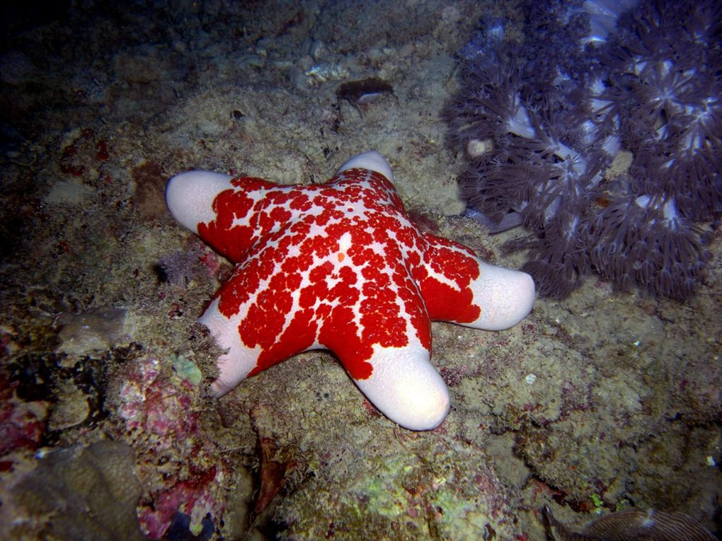 Album - Echinodermes-2