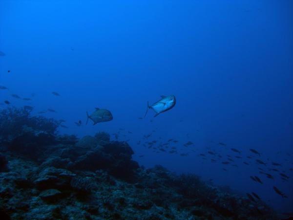 Album - Geyser-reef