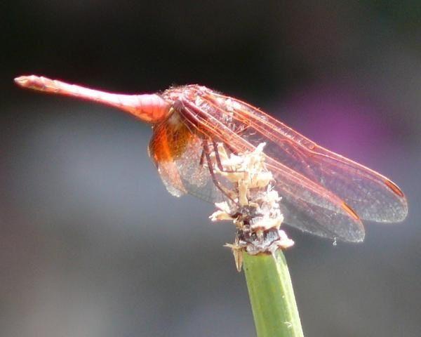Album - Insectes