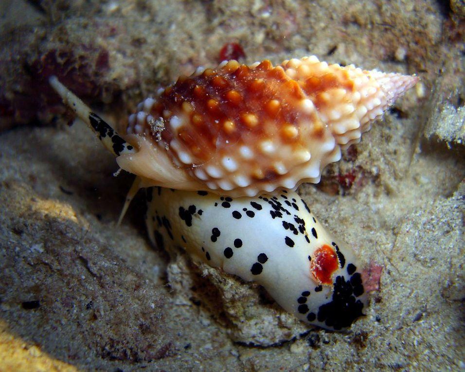 Album - Mollusques