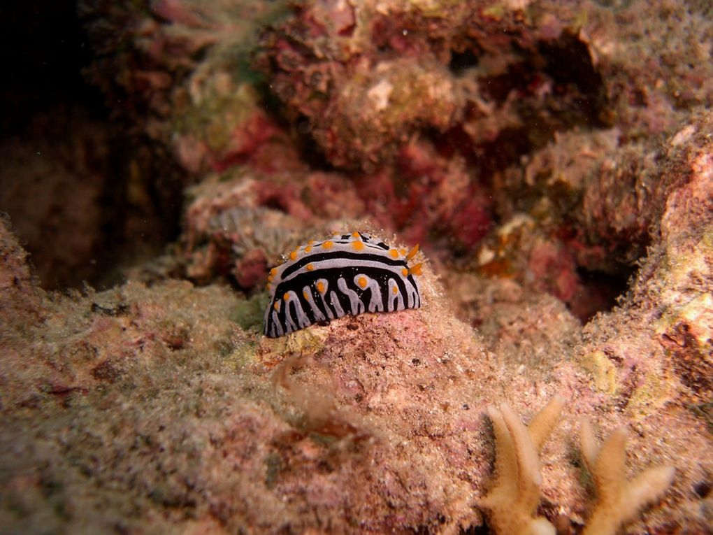 Album - Nudibranches-2