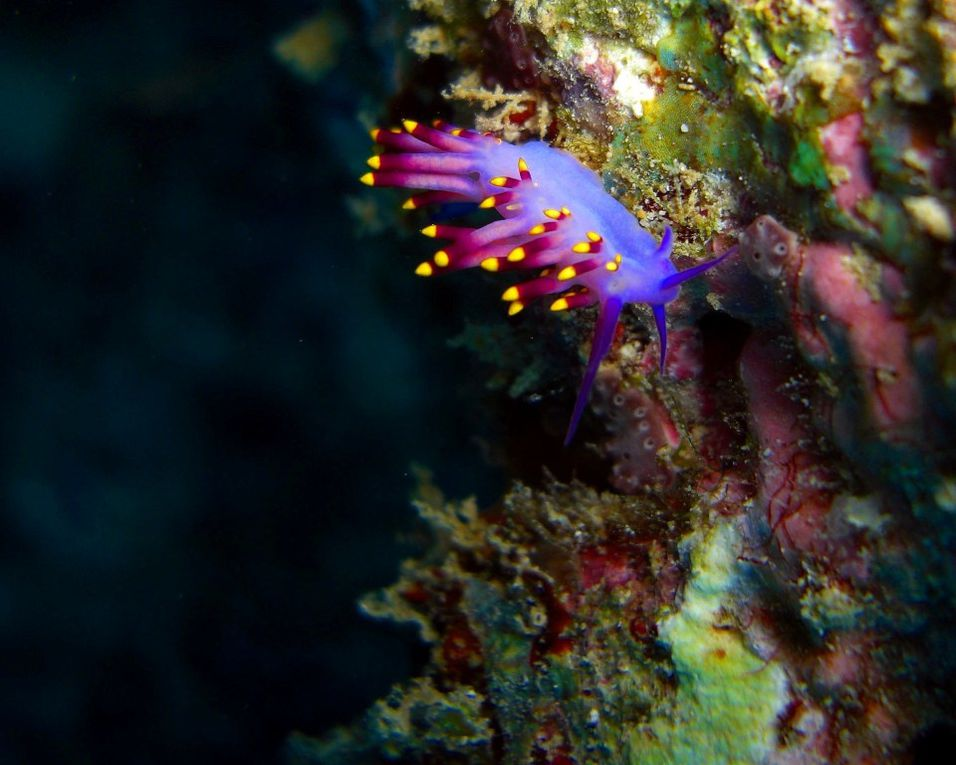 Album - Nudibranches